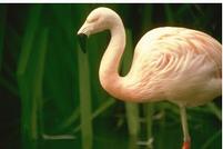 Els ocells del Delta de l' Ebre