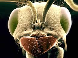Els Insectes Pal i altres companys de vida