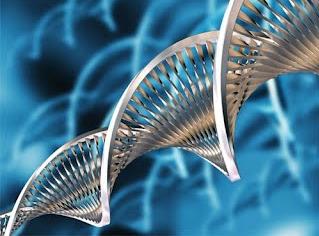 Les aplicacions de la biotecnologia